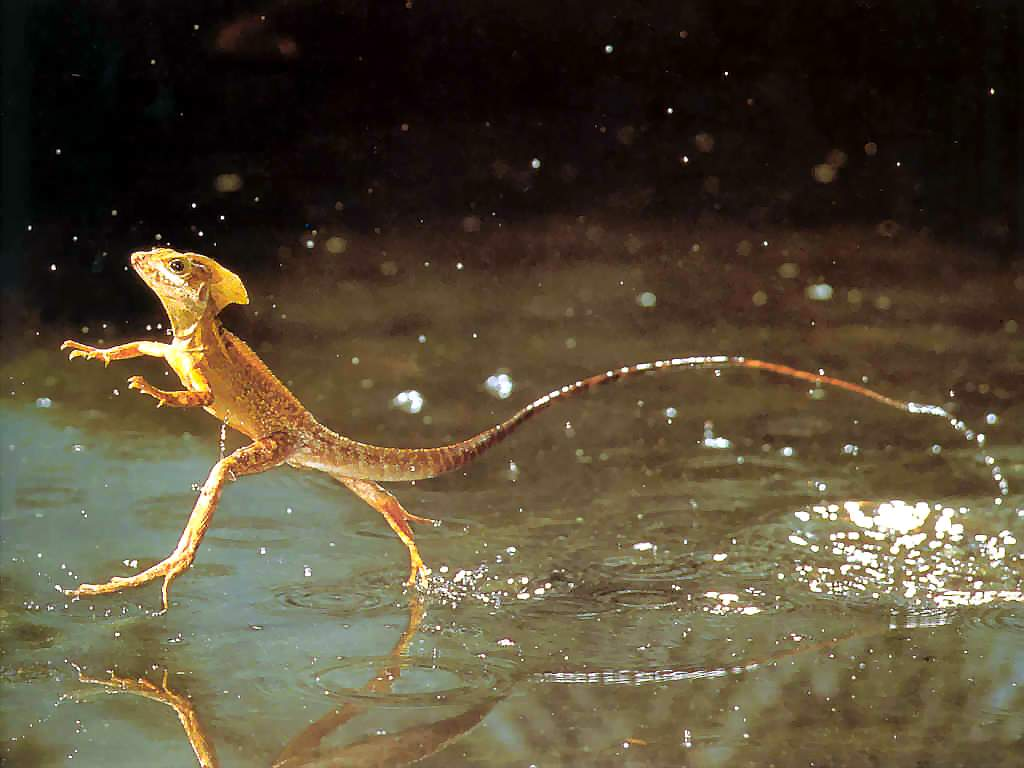 shsapbioP2-taxa - animalia-chordata-reptilia
