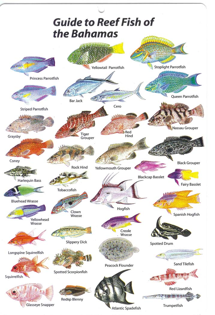 Saltwater fish breeds connor brausen 39 s saltwater fishing for All types of water